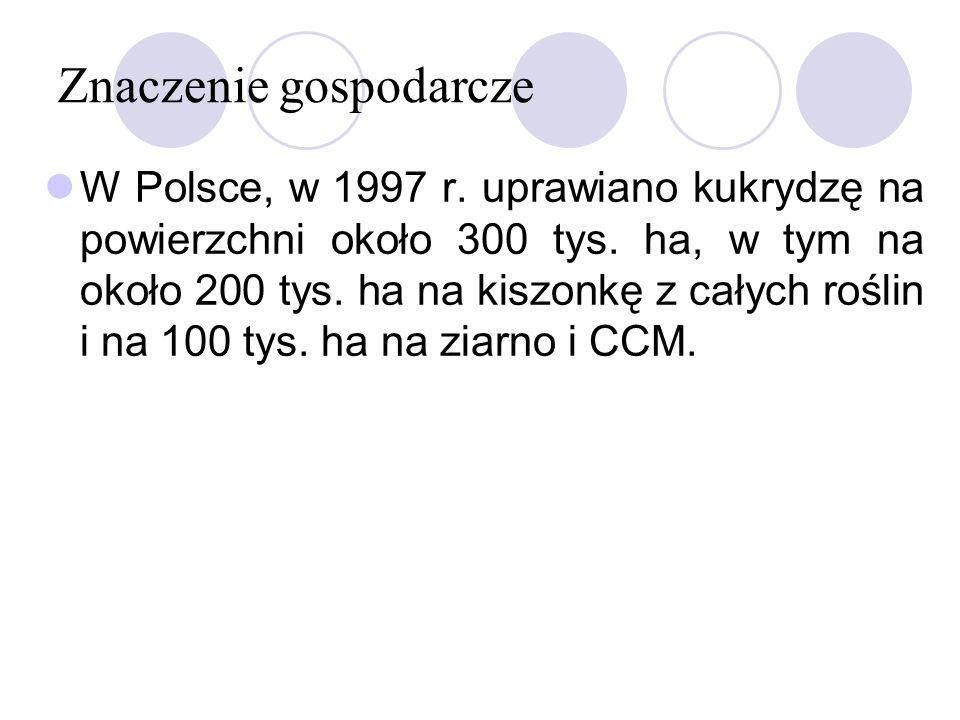 Znaczenie gospodarcze W Polsce, w 1997 r. uprawiano kukrydzę na powierzchni około 300 tys. ha, w tym na około 200 tys. ha na kiszonkę z całych roślin