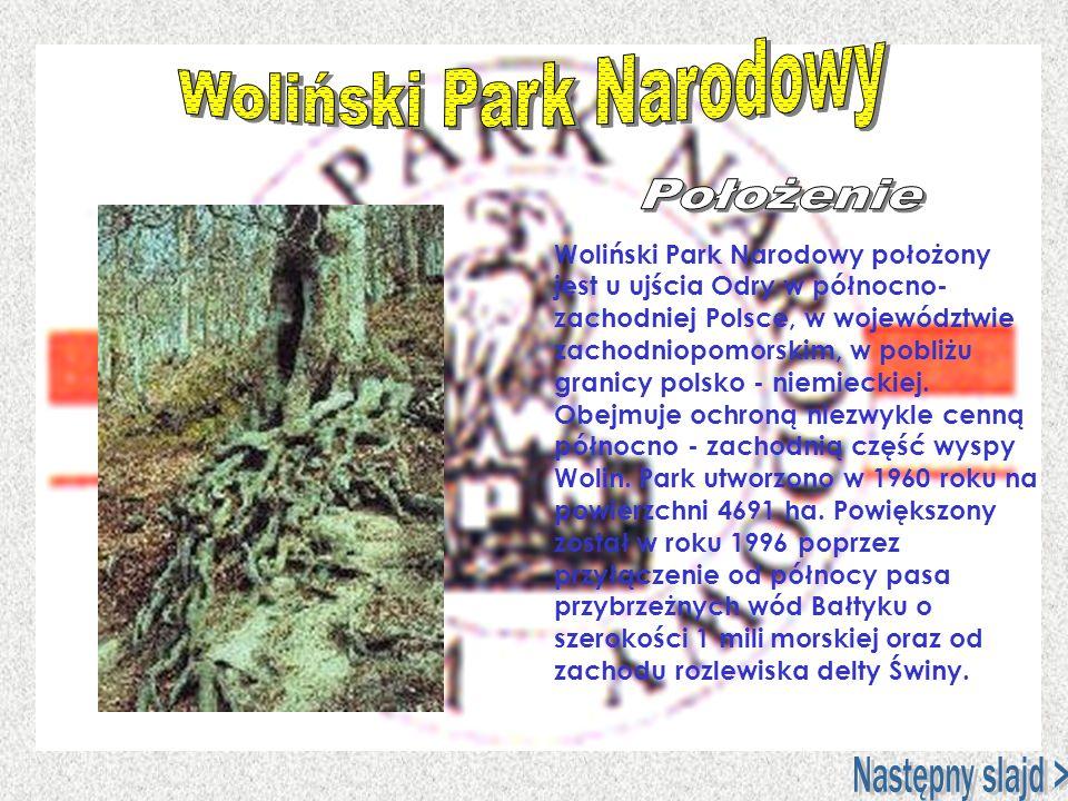 Woliński Park Narodowy położony jest u ujścia Odry w północno- zachodniej Polsce, w województwie zachodniopomorskim, w pobliżu granicy polsko - niemie