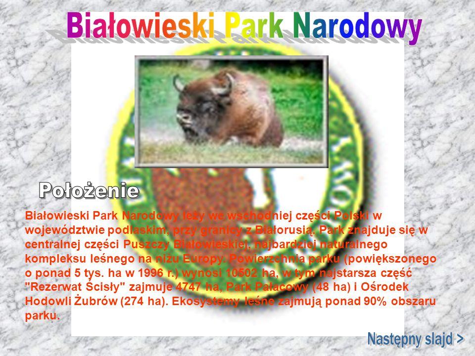 Białowieski Park Narodowy leży we wschodniej części Polski w województwie podlaskim, przy granicy z Białorusią. Park znajduje się w centralnej części