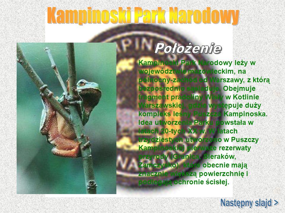 Kampinoski Park Narodowy leży w województwie mazowieckim, na północny-zachód od Warszawy, z którą bezpośrednio sąsiaduje. Obejmuje fragment pradoliny