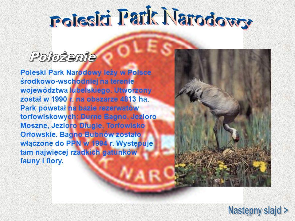Poleski Park Narodowy leży w Polsce środkowo-wschodniej na terenie województwa lubelskiego. Utworzony został w 1990 r. na obszarze 4813 ha. Park powst