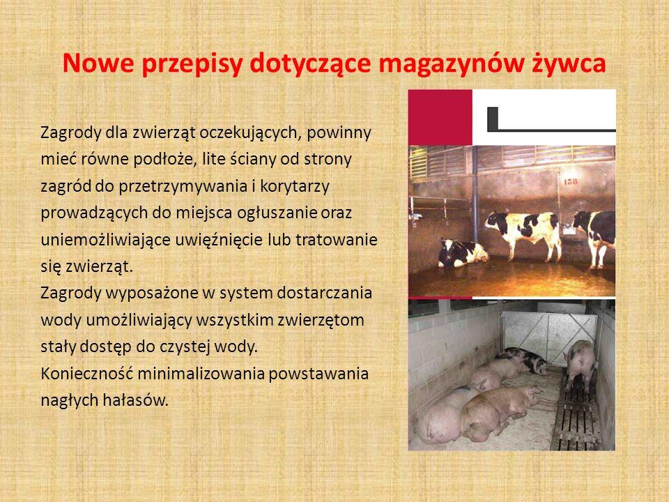 Nowe przepisy dotyczące magazynów żywca Zagrody dla zwierząt oczekujących, powinny mieć równe podłoże, lite ściany od strony zagród do przetrzymywania