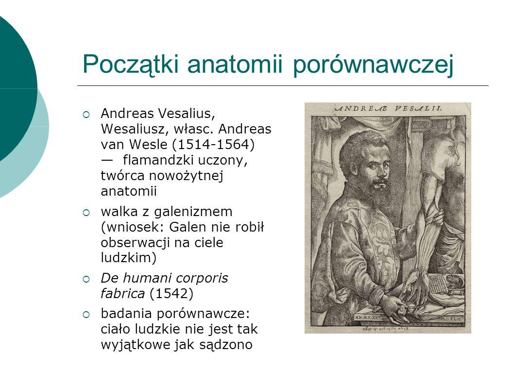 Początki anatomii porównawczej Andreas Vesalius, Wesaliusz, własc.