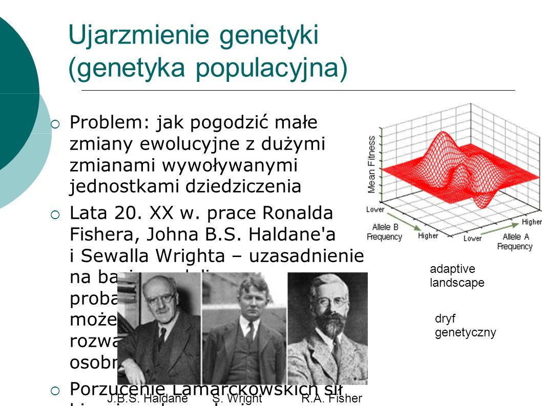 Ujarzmienie genetyki (genetyka populacyjna) Problem: jak pogodzić małe zmiany ewolucyjne z dużymi zmianami wywoływanymi jednostkami dziedziczenia Lata 20.