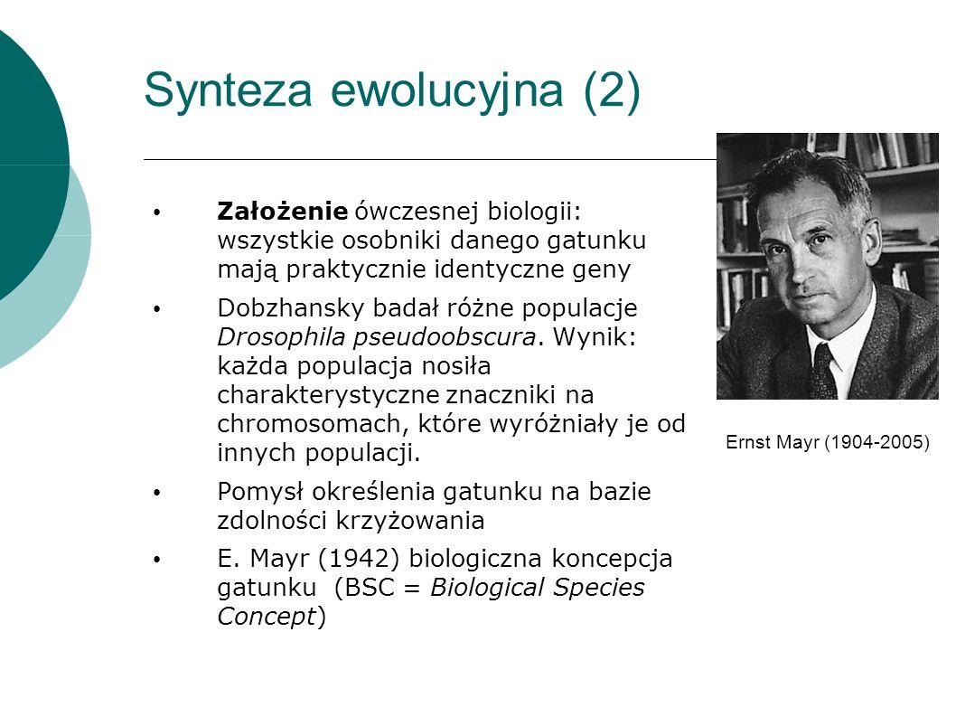 Synteza ewolucyjna (2) Założenie ówczesnej biologii: wszystkie osobniki danego gatunku mają praktycznie identyczne geny Dobzhansky badał różne populacje Drosophila pseudoobscura.