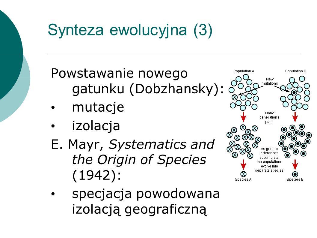 Synteza ewolucyjna (3) Powstawanie nowego gatunku (Dobzhansky): mutacje izolacja E.