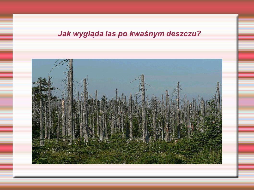 Jak wygląda las po kwaśnym deszczu?