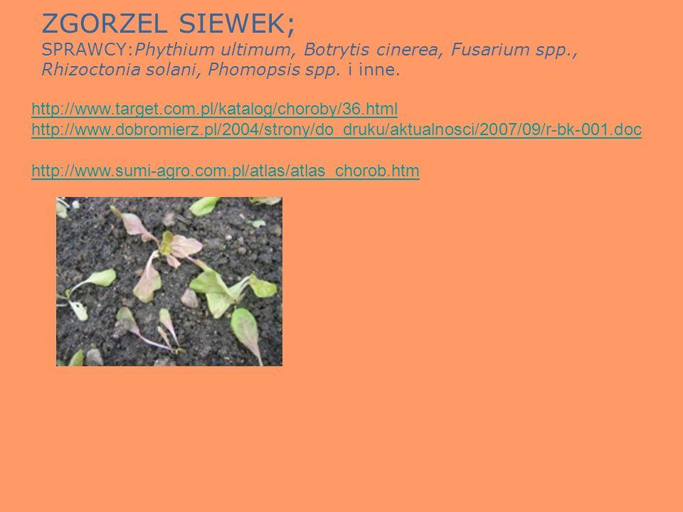 ZGORZEL SIEWEK; SPRAWCY:Phythium ultimum, Botrytis cinerea, Fusarium spp., Rhizoctonia solani, Phomopsis spp. i inne. http://www.target.com.pl/katalog
