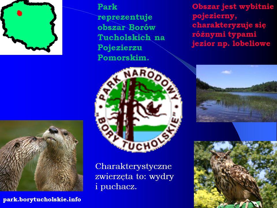 Park reprezentuje obszar Borów Tucholskich na Pojezierzu Pomorskim. Obszar jest wybitnie pojezierny, charakteryzuje się różnymi typami jezior np. lobe