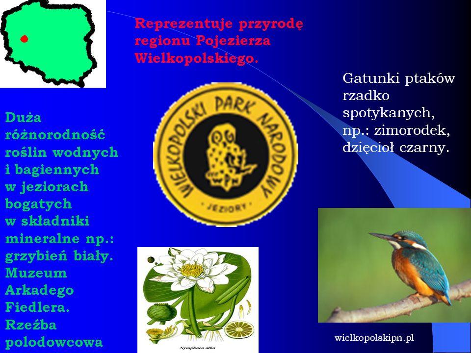 Reprezentuje przyrodę regionu Pojezierza Wielkopolskiego. Duża różnorodność roślin wodnych i bagiennych w jeziorach bogatych w składniki mineralne np.