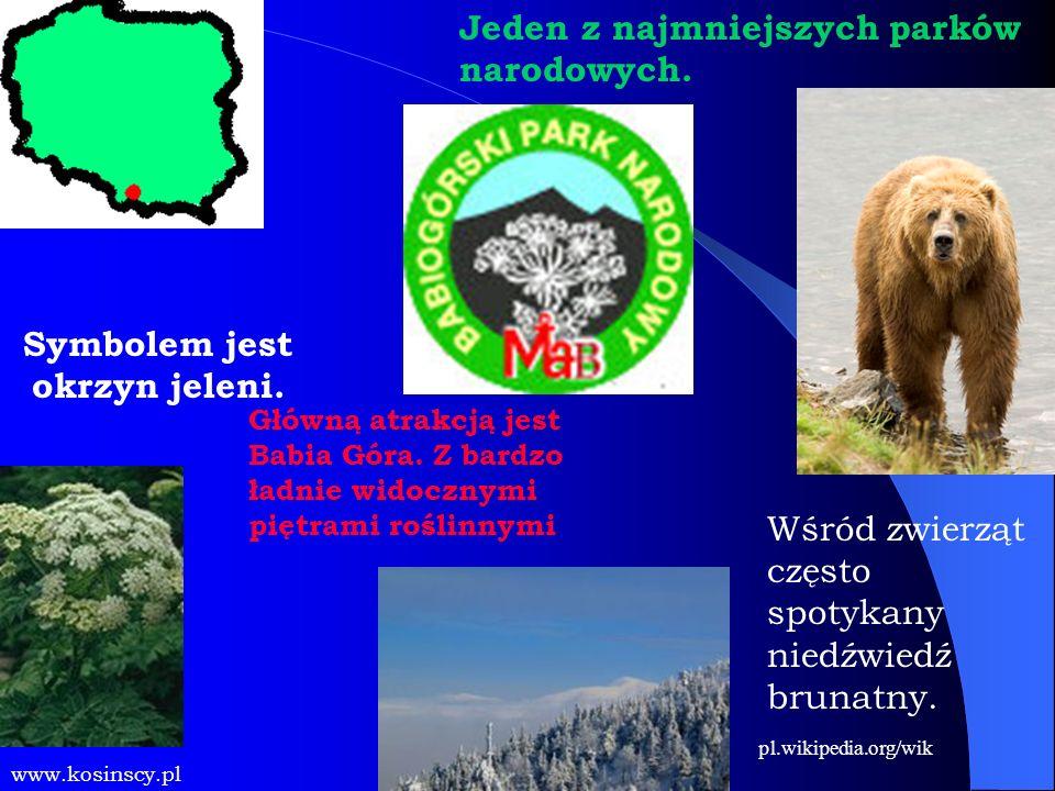 Główną atrakcją jest Babia Góra. Z bardzo ładnie widocznymi piętrami roślinnymi Symbolem jest okrzyn jeleni. www.kosinscy.pl Jeden z najmniejszych par