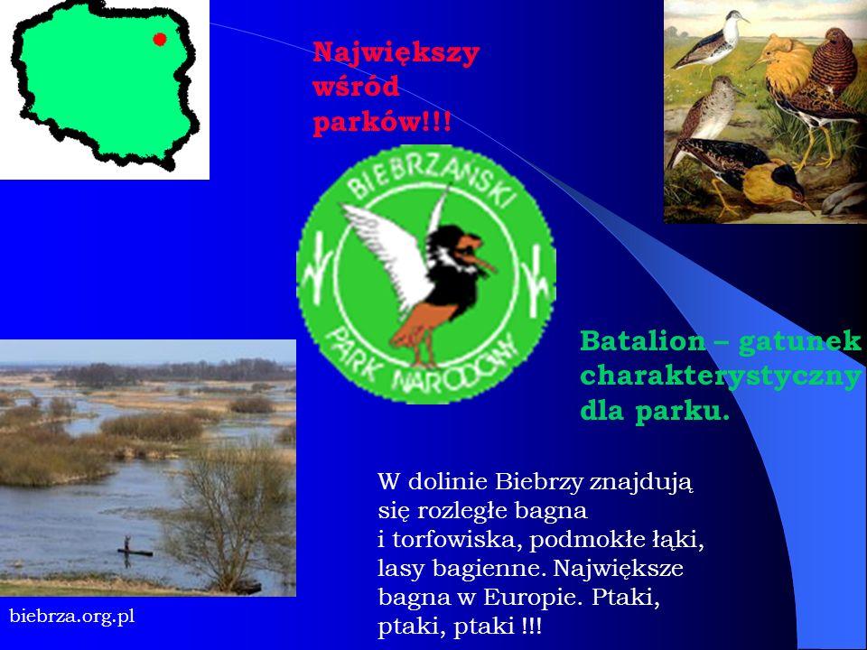 W dolinie Biebrzy znajdują się rozległe bagna i torfowiska, podmokłe łąki, lasy bagienne. Największe bagna w Europie. Ptaki, ptaki, ptaki !!! biebrza.