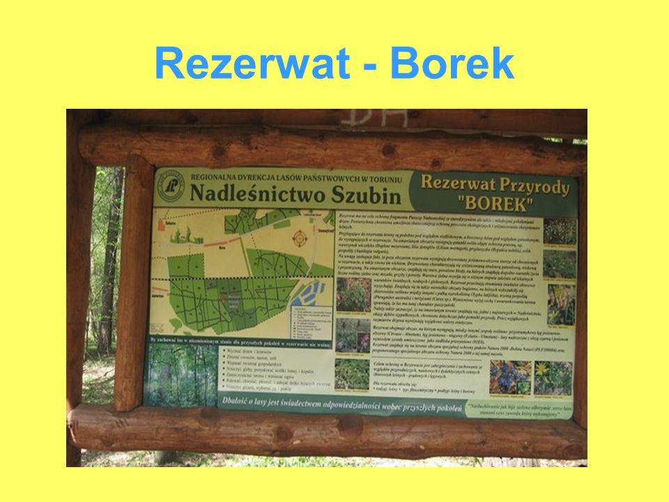 Rezerwat - Borek