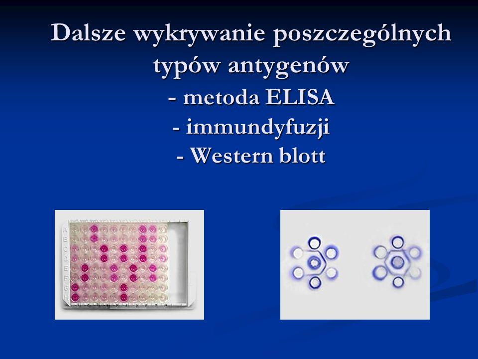 Dalsze wykrywanie poszczególnych typów antygenów - metoda ELISA - immundyfuzji - Western blott