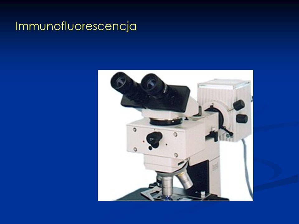 Immunofluorescencja bezpośrednia Ag F F F FFF UV Emisja światła Antygen tkankowy Przeciwciało Sprzężone z fluorochromem