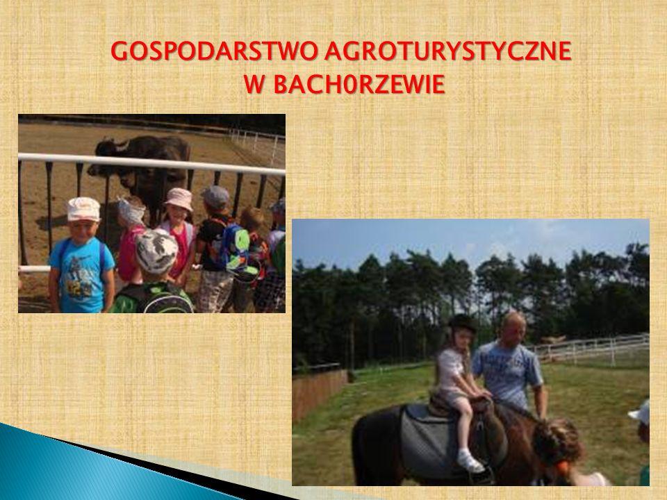 GOSPODARSTWO AGROTURYSTYCZNE W BACH0RZEWIE W BACH0RZEWIE