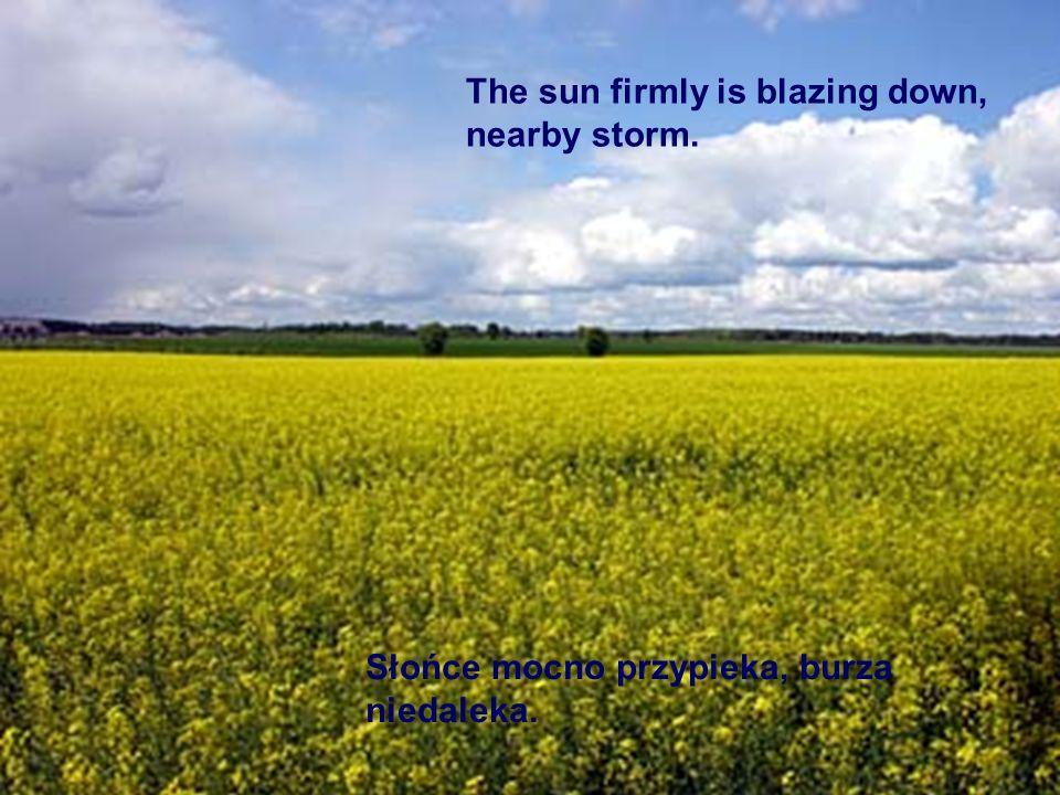 Słońce mocno przypieka, burza niedaleka. The sun firmly is blazing down, nearby storm.