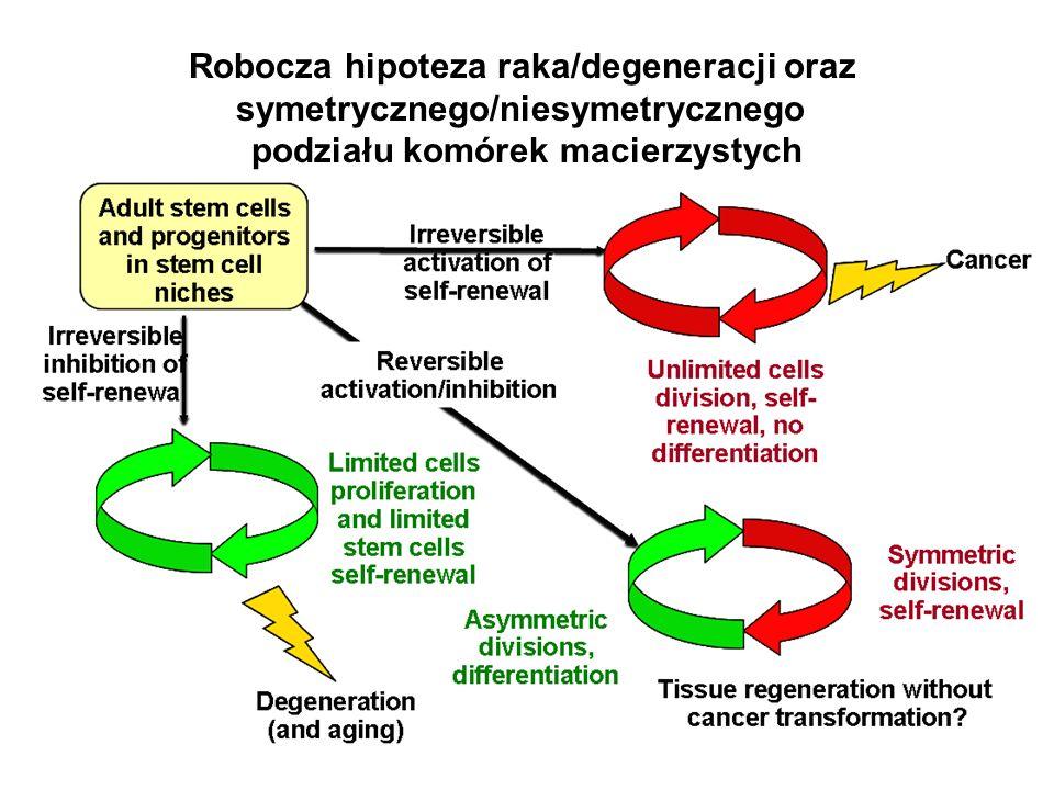 Robocza hipoteza raka/degeneracji oraz symetrycznego/niesymetrycznego podziału komórek macierzystych