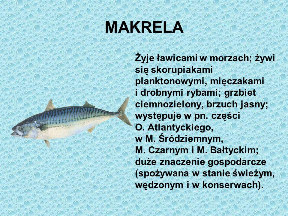 MAKRELA Żyje ławicami w morzach; żywi się skorupiakami planktonowymi, mięczakami i drobnymi rybami; grzbiet ciemnozielony, brzuch jasny; występuje w p