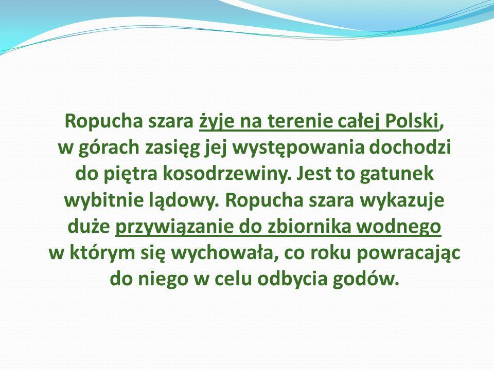 Ropucha szara żyje na terenie całej Polski, w górach zasięg jej występowania dochodzi do piętra kosodrzewiny. Jest to gatunek wybitnie lądowy. Ropucha