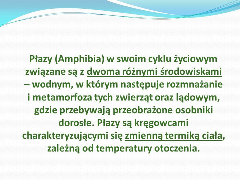 Płazy (Amphibia) w swoim cyklu życiowym związane są z dwoma różnymi środowiskami – wodnym, w którym następuje rozmnażanie i metamorfoza tych zwierząt