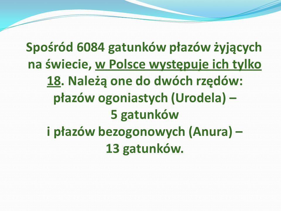 Spośród 6084 gatunków płazów żyjących na świecie, w Polsce występuje ich tylko 18. Należą one do dwóch rzędów: płazów ogoniastych (Urodela) – 5 gatunk