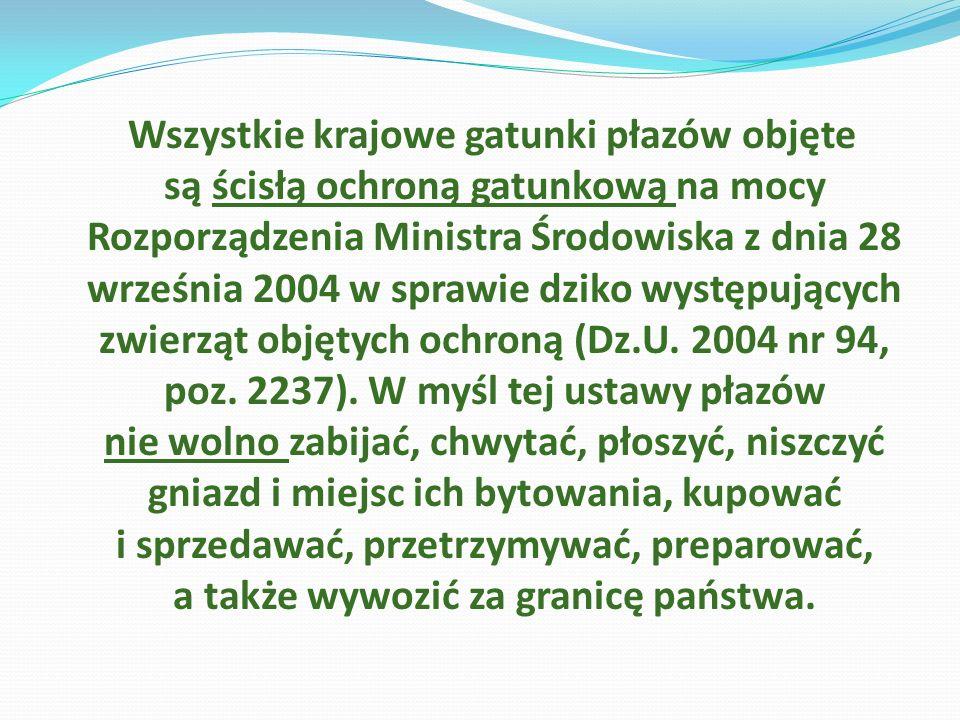 Wszystkie krajowe gatunki płazów objęte są ścisłą ochroną gatunkową na mocy Rozporządzenia Ministra Środowiska z dnia 28 września 2004 w sprawie dziko