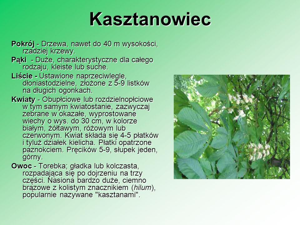Kasztanowiec Pokrój - Drzewa, nawet do 40 m wysokości, rzadziej krzewy. Pąki - Duże, charakterystyczne dla całego rodzaju, kleiste lub suche. Liście -