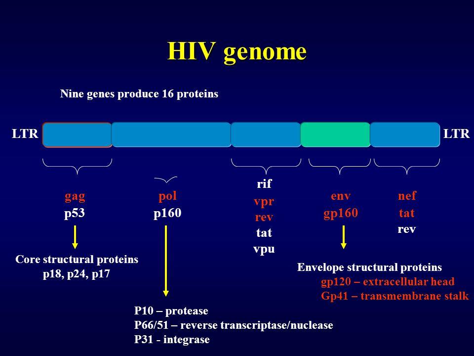 HIV genome LTR rif vpr rev tat vpu pol p160 gag p53 env gp160 nef tat rev Core structural proteins p18, p24, p17 P10 – protease P66/51 – reverse transcriptase/nuclease P31 - integrase Envelope structural proteins gp120 – extracellular head Gp41 – transmembrane stalk Nine genes produce 16 proteins