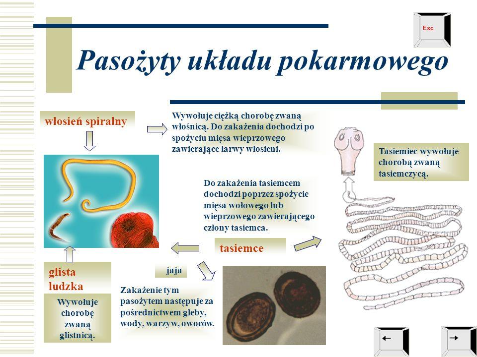 Pasożyty układu pokarmowego tasiemce glista ludzka włosień spiralny jaja Wywołuje chorobę zwaną glistnicą. Zakażenie tym pasożytem następuje za pośred