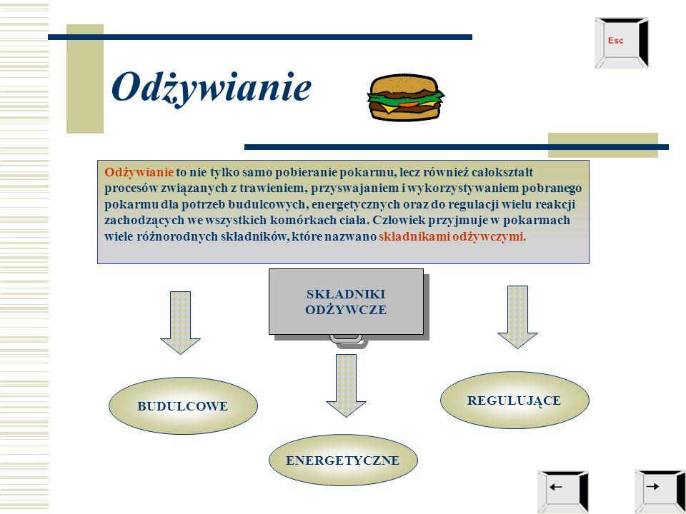Odżywianie Odżywianie to nie tylko samo pobieranie pokarmu, lecz również całokształt procesów związanych z trawieniem, przyswajaniem i wykorzystywaniem pobranego pokarmu dla potrzeb budulcowych, energetycznych oraz do regulacji wielu reakcji zachodzących we wszystkich komórkach ciała.