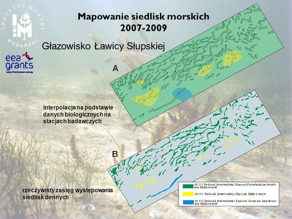 Głazowisko Ławicy Słupskiej interpolacja na podstawie danych biologicznych na stacjach badawczych rzeczywisty zasięg występowania siedlisk dennych Map