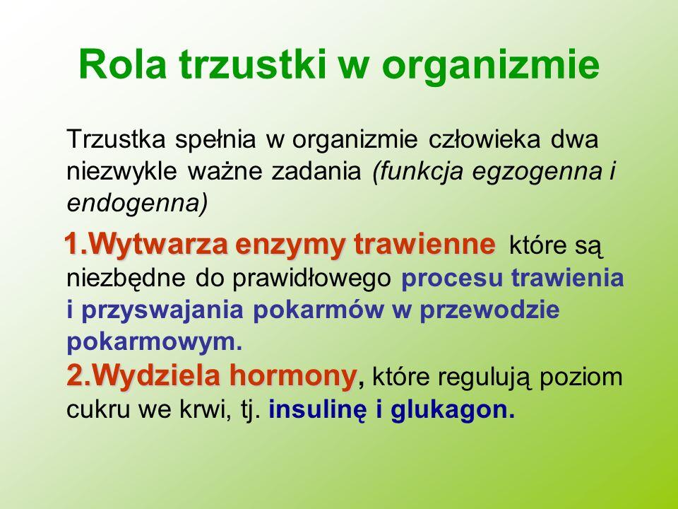 Rola trzustki w organizmie Trzustka spełnia w organizmie człowieka dwa niezwykle ważne zadania (funkcja egzogenna i endogenna) 1.Wytwarza enzymy trawi