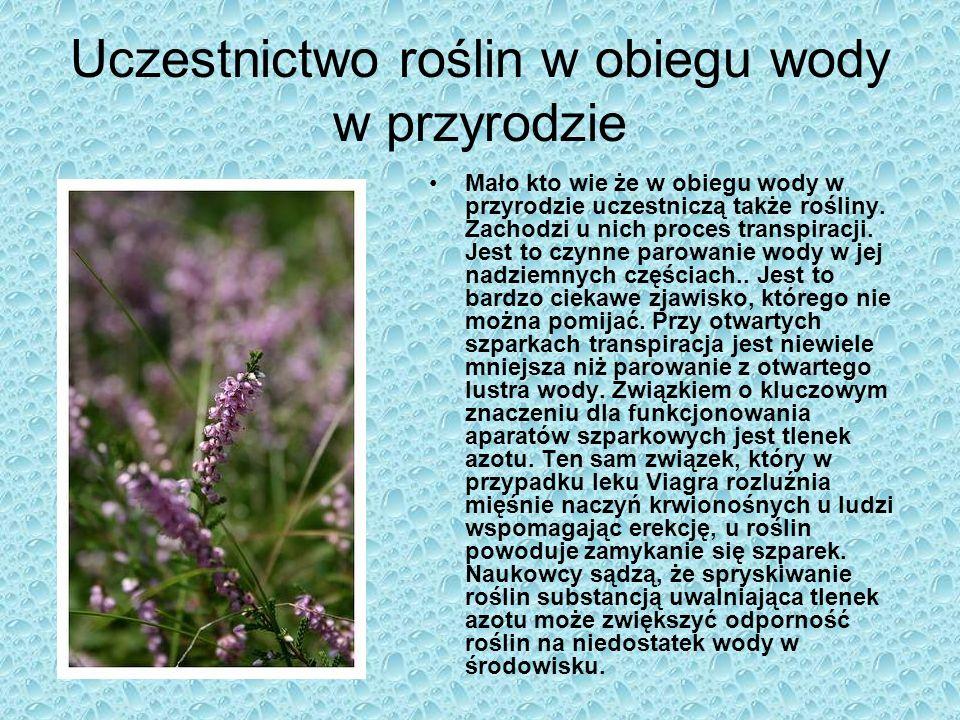 Bibliografia http://zdch.amu.edu.pl/projekty/plakaty/gifd/obieg_wody_w_przyrodz ie2.gifhttp://zdch.amu.edu.pl/projekty/plakaty/gifd/obieg_wody_w_przyrodz ie2.gif http://www.fotomotywy.pl/img.php?i=fo,96358,640,1500,119238395 9http://www.fotomotywy.pl/img.php?i=fo,96358,640,1500,119238395 9 http://ga.water.usgs.gov/edu/graphics/polish/wcdiagram.jpg Teoria - www.wikipedia.pl http://www.digart.pl/praca/1055206/subtelnosci.html http://www.digart.pl/praca/1162938/sen.html