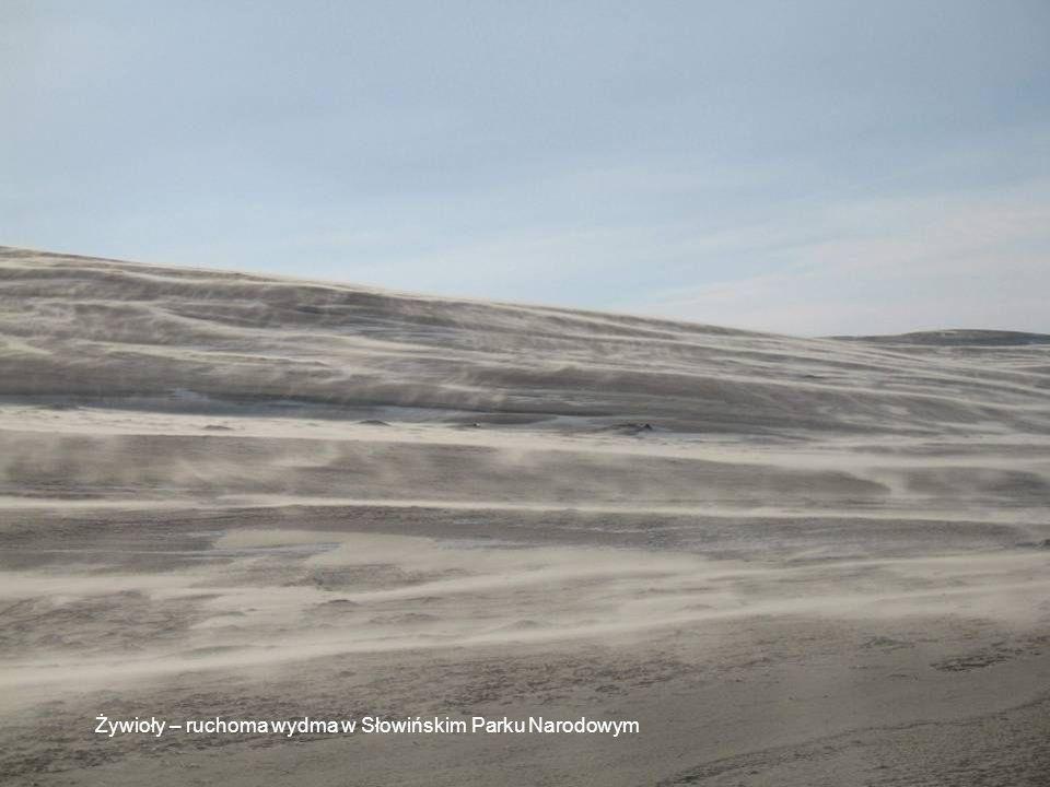 Żywioły – ruchoma wydma w Słowińskim Parku Narodowym