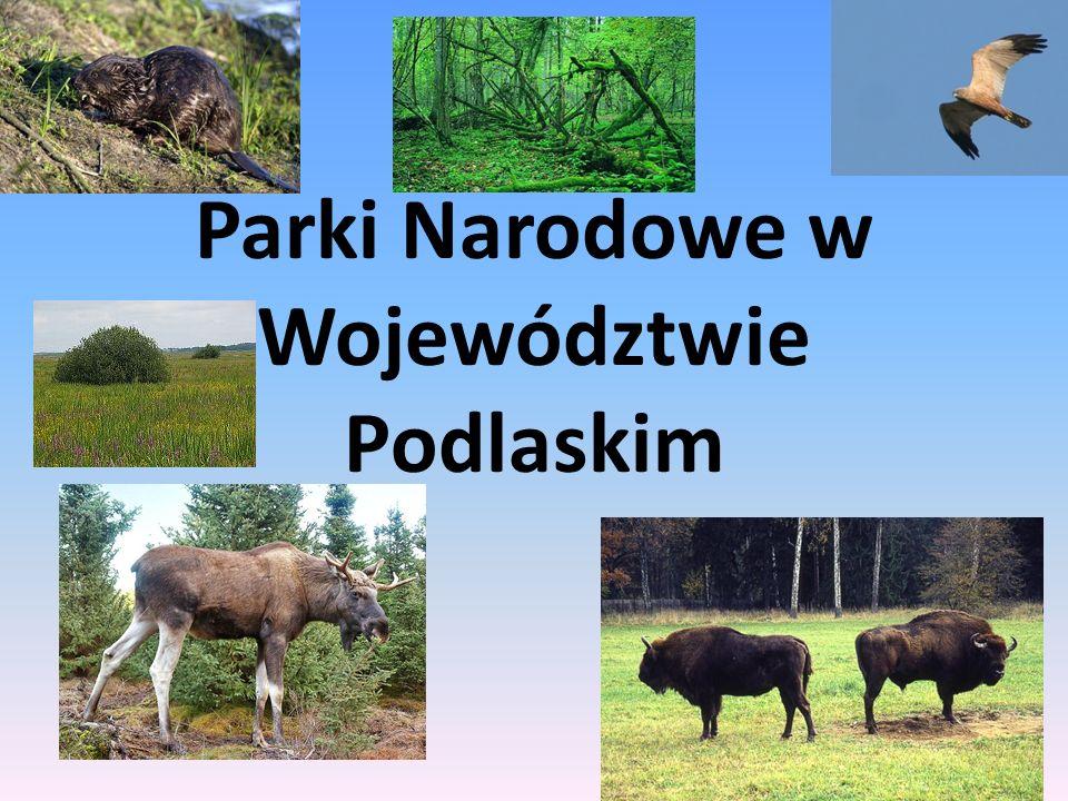 Parki narodowe W wojewodztwie podlaskim znajdują się 4 parki narodowe : Białowieski Park Narodowy Biebrzański Park Narodowy Narwiański Park Narodowy Wigierski Park Narodowy