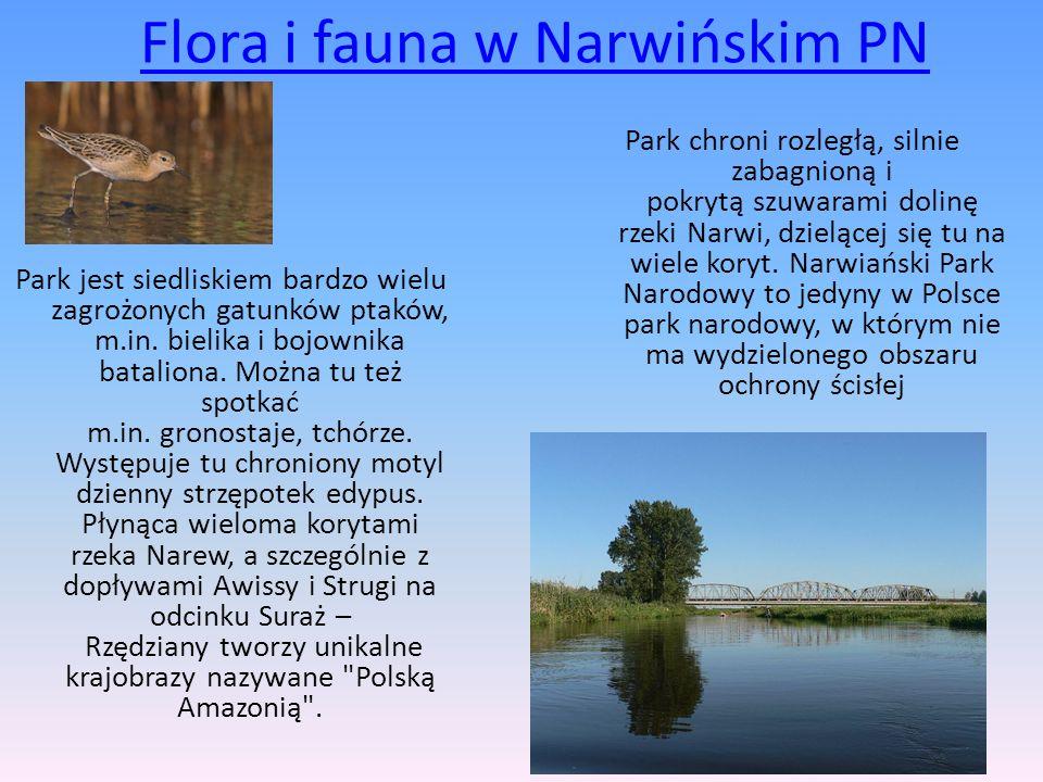 Flora i fauna w Narwińskim PN Park jest siedliskiem bardzo wielu zagrożonych gatunków ptaków, m.in. bielika i bojownika bataliona. Można tu też spotka
