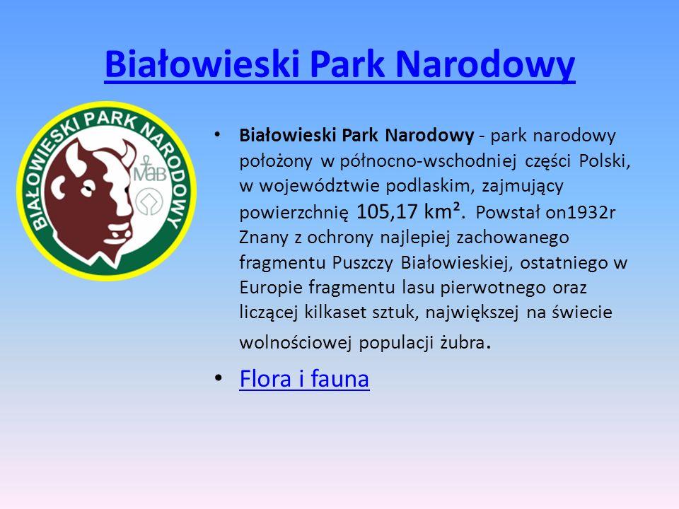 Białowieski Park Narodowy Białowieski Park Narodowy - park narodowy położony w północno-wschodniej części Polski, w województwie podlaskim, zajmujący
