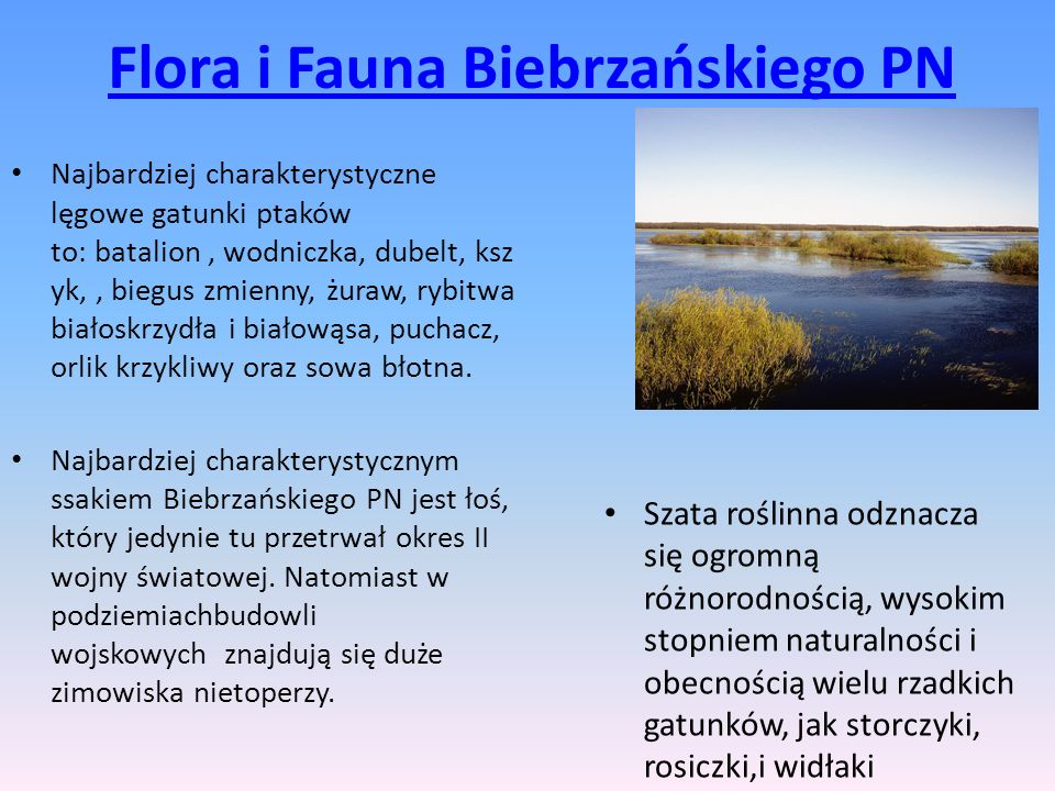 Flora i Fauna Biebrzańskiego PN Najbardziej charakterystyczne lęgowe gatunki ptaków to: batalion, wodniczka, dubelt, ksz yk,, biegus zmienny, żuraw, r