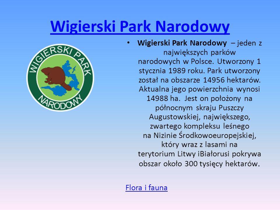 Wigierski Park Narodowy Wigierski Park Narodowy – jeden z największych parków narodowych w Polsce. Utworzony 1 stycznia 1989 roku. Park utworzony zost