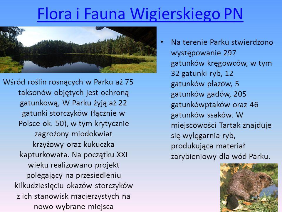 Flora i Fauna Wigierskiego PN Wśród roślin rosnących w Parku aż 75 taksonów objętych jest ochroną gatunkową, W Parku żyją aż 22 gatunki storczyków (łą