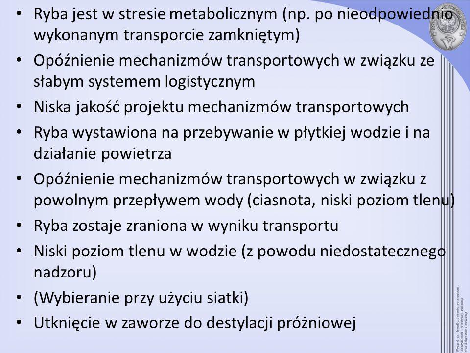 Ryba jest w stresie metabolicznym (np. po nieodpowiednio wykonanym transporcie zamkniętym) Opóźnienie mechanizmów transportowych w związku ze słabym s