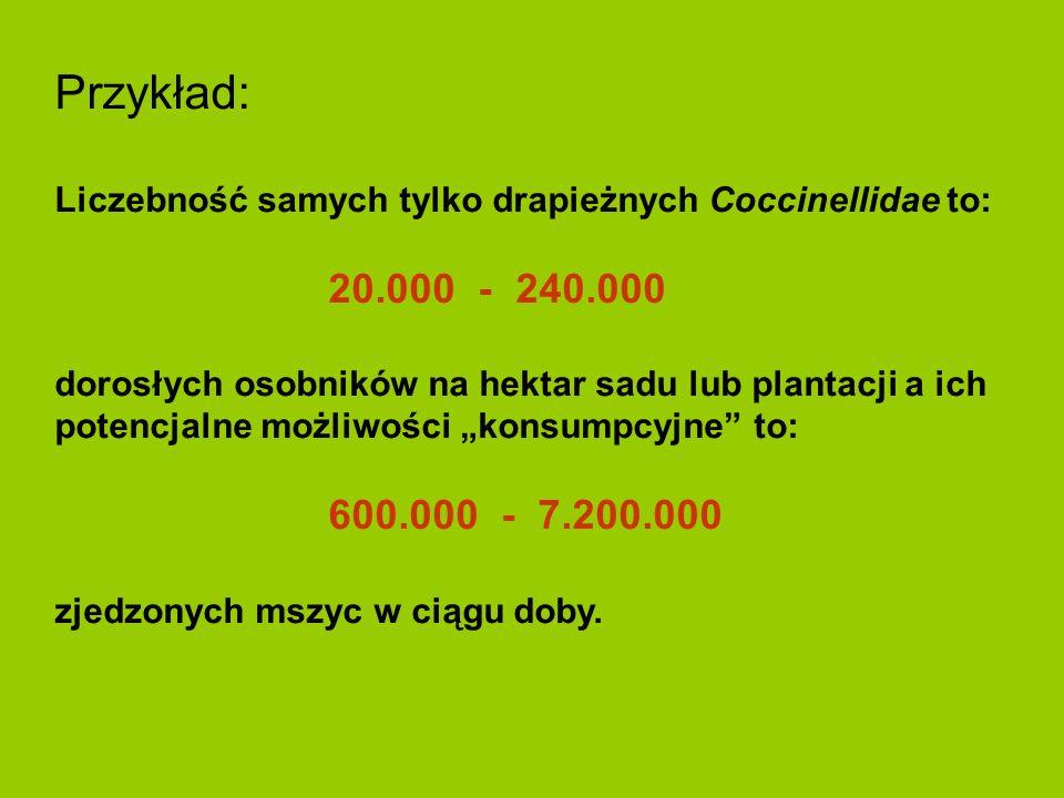 Przykład: Liczebność samych tylko drapieżnych Coccinellidae to: 20.000 - 240.000 dorosłych osobników na hektar sadu lub plantacji a ich potencjalne mo