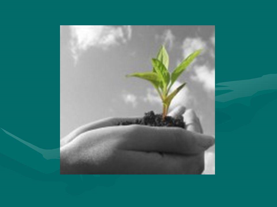 Drzewa filtrują powietrze którym oddychamy poprzez pochłanianie z atmosfery szkodliwych dla nas substancji i dwutlenku węgla w procesie fotosyntezy w zamian dając nam czysty tlen.