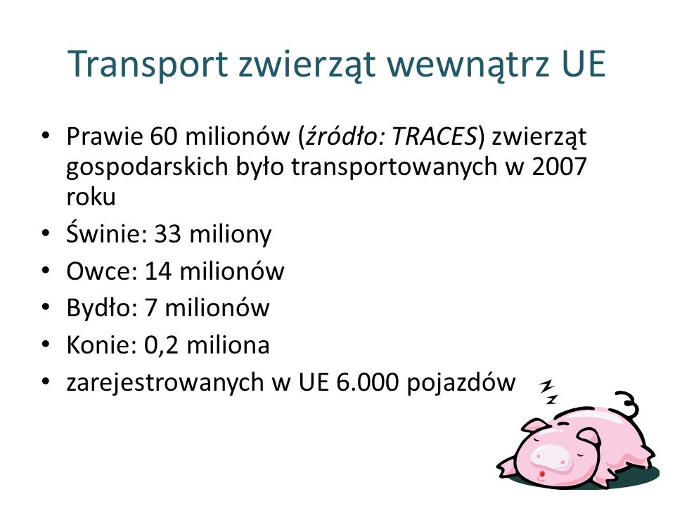 Transport zwierząt wewnątrz UE Prawie 60 milionów (źródło: TRACES) zwierząt gospodarskich było transportowanych w 2007 roku Świnie: 33 miliony Owce: 1