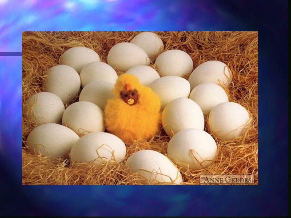 Ze 100 zapłodnionych komórek jajowych okresu noworodkowego dożywa 13 dzieci !!! Poczęcie i urodzenie dziecka to naprawdę niecodzienne wydarzenie.