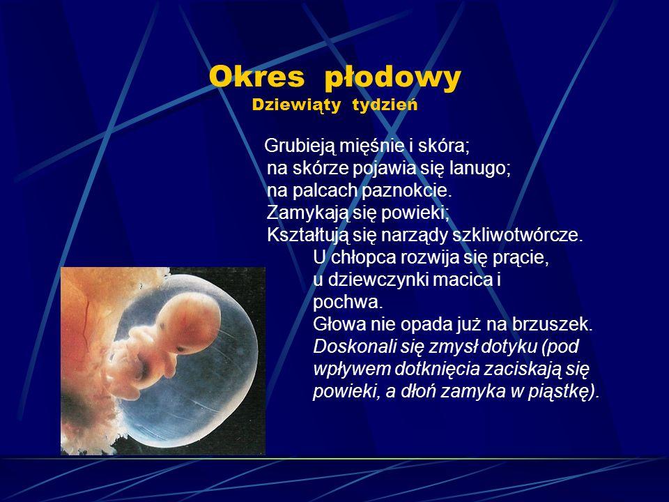 Okres płodowy Dziewiąty tydzień Grubieją mięśnie i skóra; na skórze pojawia się lanugo; na palcach paznokcie. Zamykają się powieki; Kształtują się nar