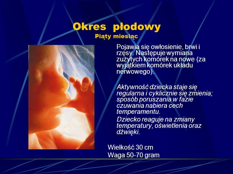 Okres płodowy Piąty miesiąc Pojawia się owłosienie, brwi i rzęsy. Następuje wymiana zużytych komórek na nowe (za wyjątkiem komórek układu nerwowego).
