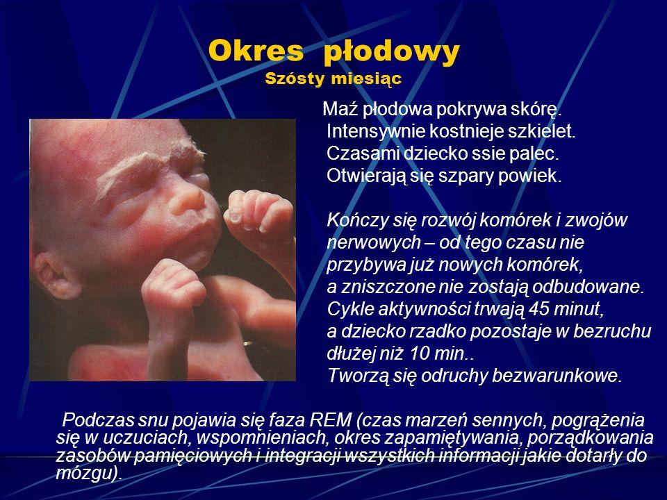 Okres płodowy Szósty miesiąc Maź płodowa pokrywa skórę. Intensywnie kostnieje szkielet. Czasami dziecko ssie palec. Otwierają się szpary powiek. Kończ