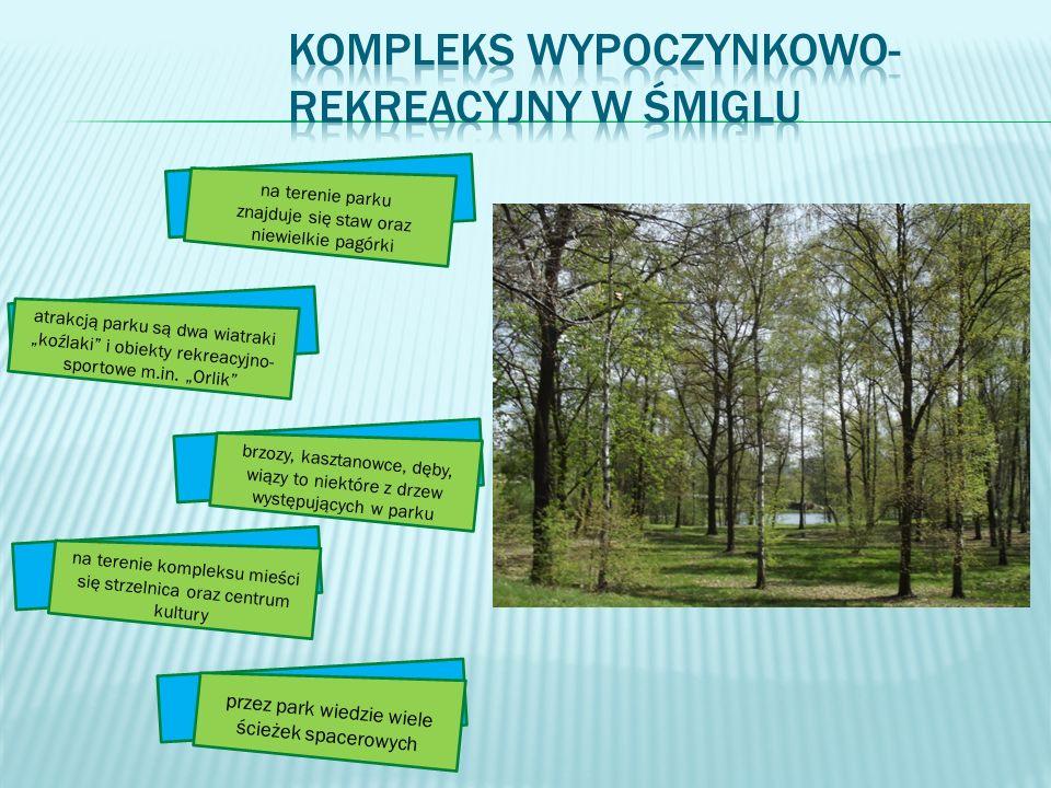 atrakcją parku są dwa wiatraki koźlaki i obiekty rekreacyjno- sportowe m.in. Orlik brzozy, kasztanowce, dęby, wiązy to niektóre z drzew występujących
